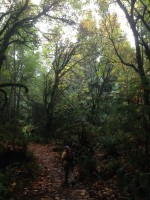 When the Rain Comes - Point Defiance Park October 2015